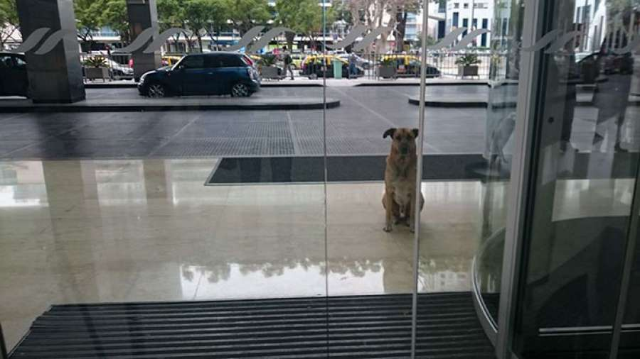 Azafata adopta a perro que la esperó seis meses en hotel