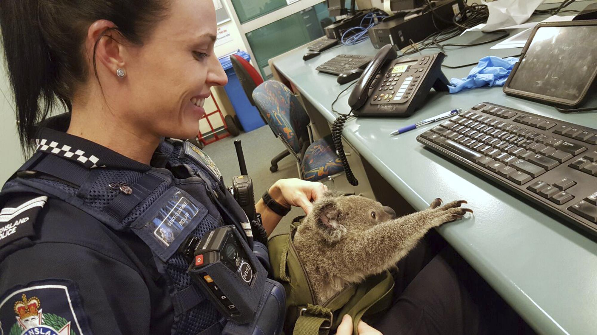 Detienen a una mujer que llevaba un koala en su mochila