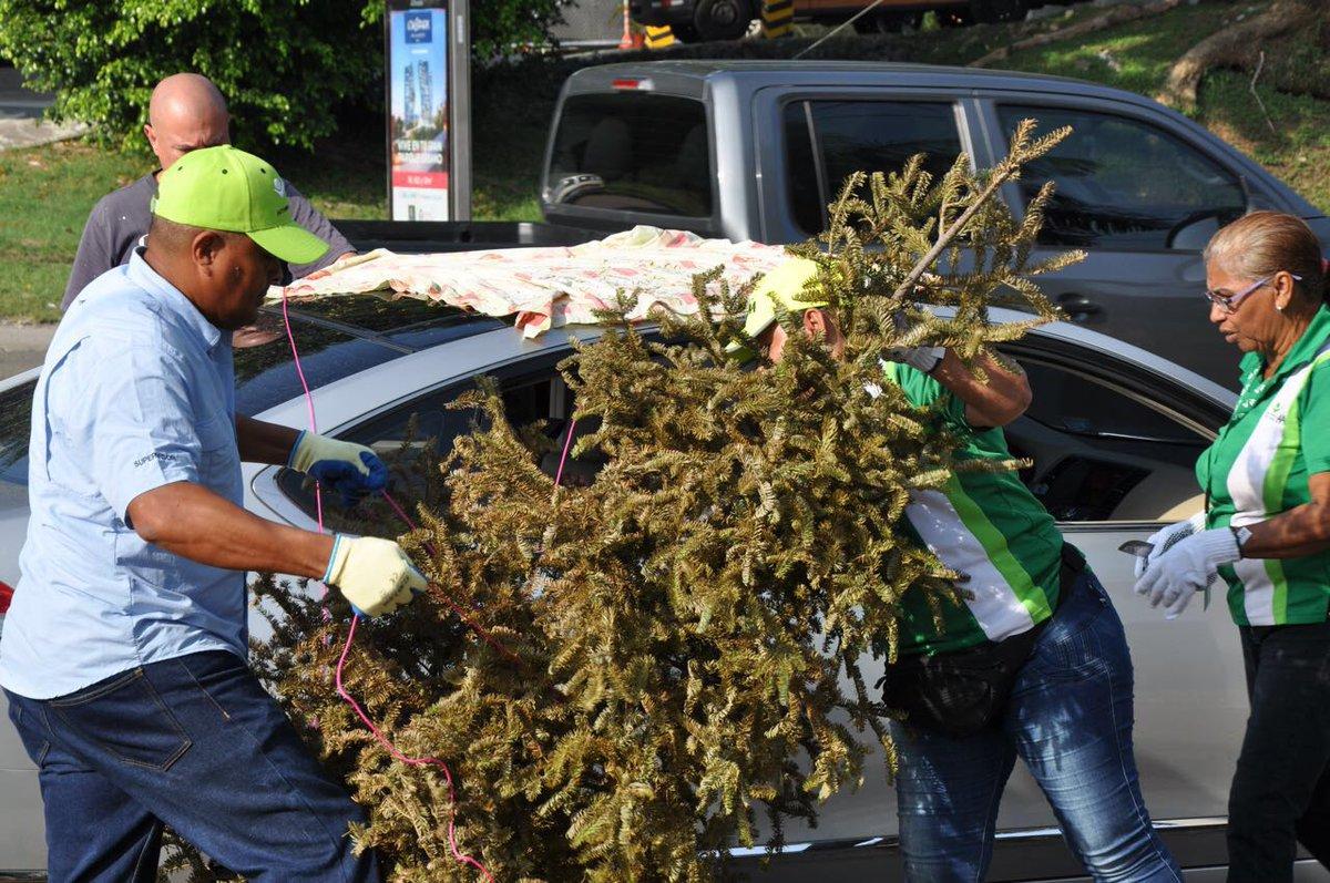 Efectúan operativo de recolección de árboles navideños