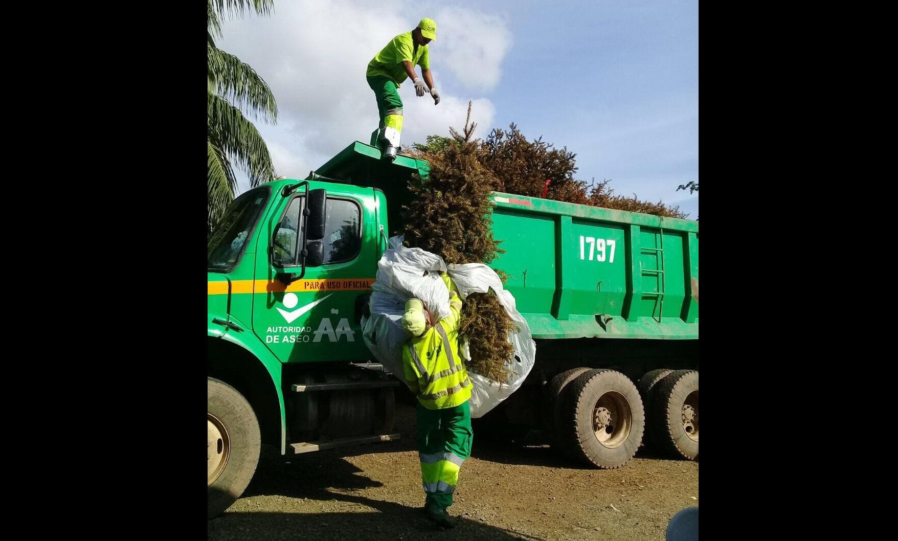 Aaud recolectó más de cinco mil arbolitos de Navidad