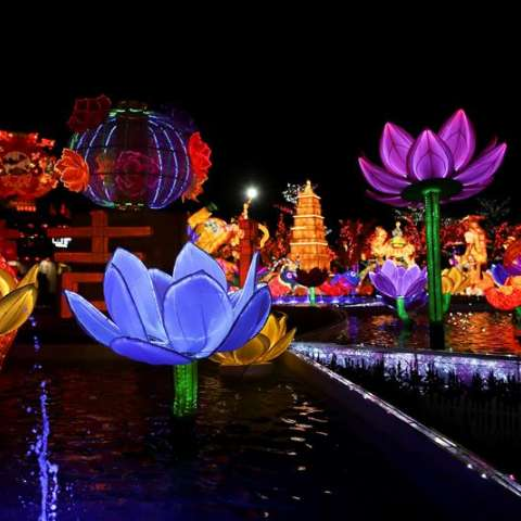 Flores coloridas decoran antes de las celebraciones del Año Nuevo Lunar Chino en el templo Dong Zen en Jenjarom, en las afueras de Kuala Lumpur, Malasia. EFE