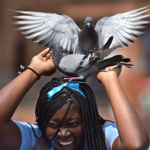 Una mujer juega con palomas este jueves, un día antes de la conmemoración del Día Internacional de la Mujer, en Cali (Colombia). EFE