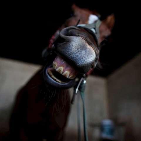Vuelven a correr los caballos /EFE