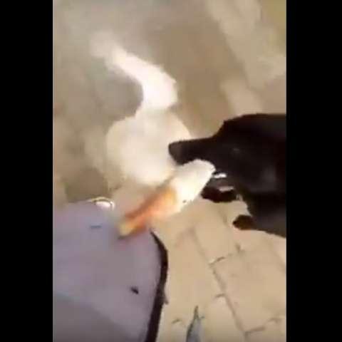 Captura de video Actualidad.rt.com
