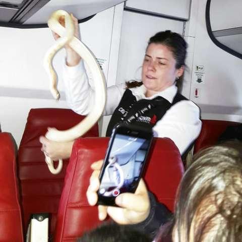 Una asistente de vuelo la coloca el reptil en una bolsa de desperdicios.  AP