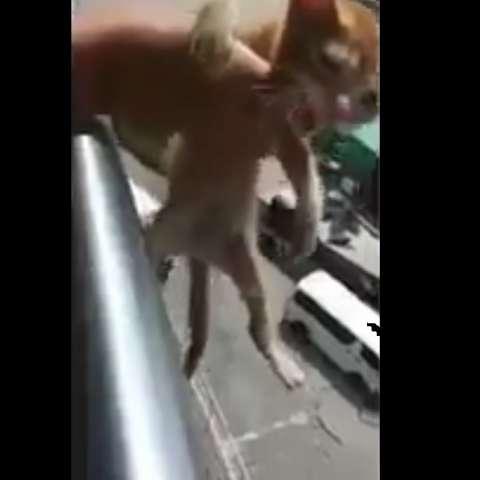 Captura de video Twitter.