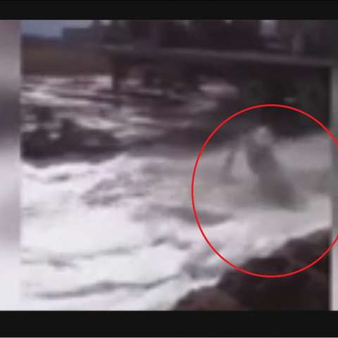 Captura de video dailymotion.com