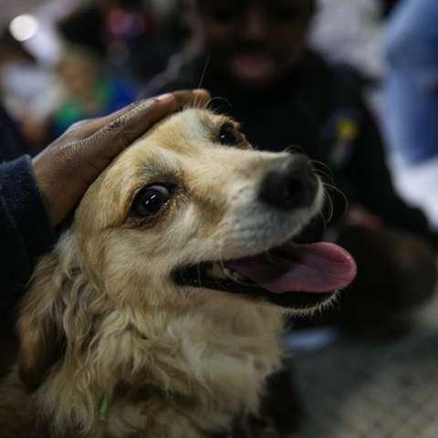 Por estudios previos ya se sabe que los canes domésticos se fijan en lo atento que está una persona. / EFE