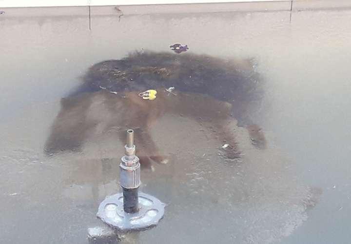 La imagen de un perro congelado en una fuente conmueve en Bolivia