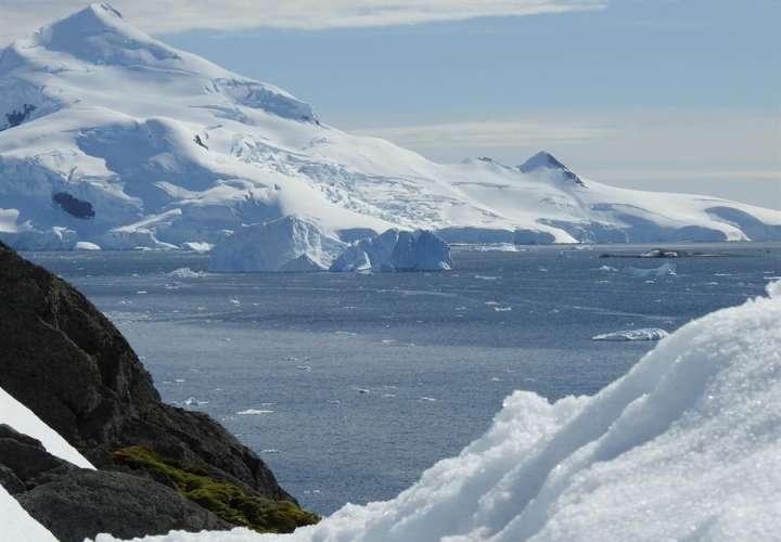 Científicos detectan especies de mosquitos invasores en la Antártida