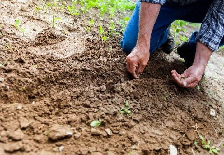 La actividad agrícola no se ha detenido. (IMagen ilustrativa: Pexels)
