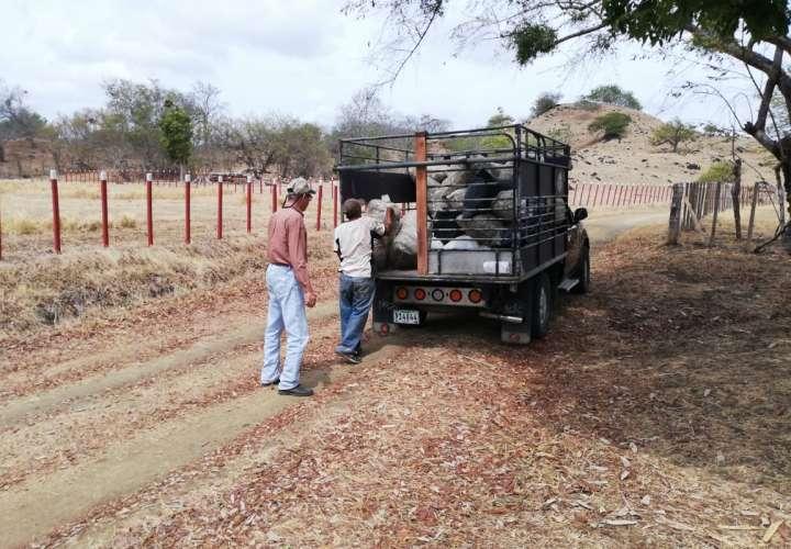 Productores piden declaratoria de emergencia por sequía