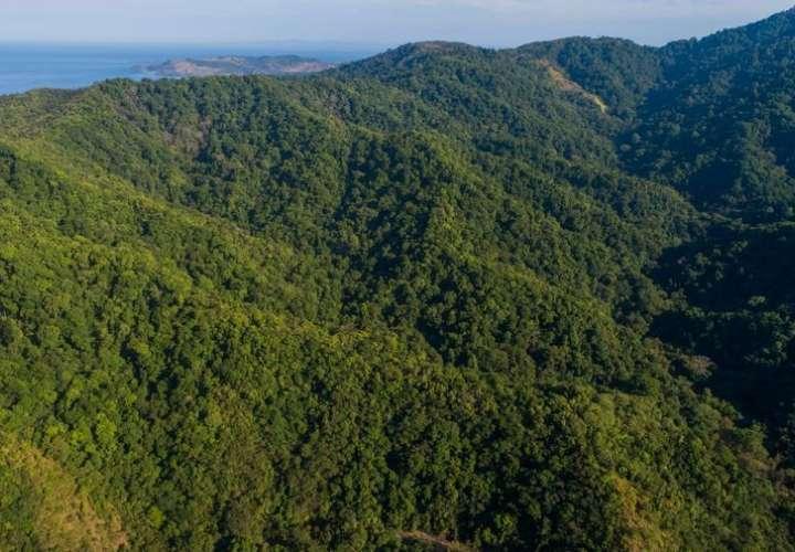 Suspenden permisos para aprovechamiento de madera en bosques naturales
