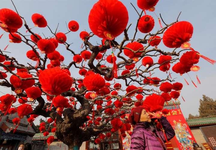 La rata se prepara para su arribo a América con festejos del Año Nuevo Chino