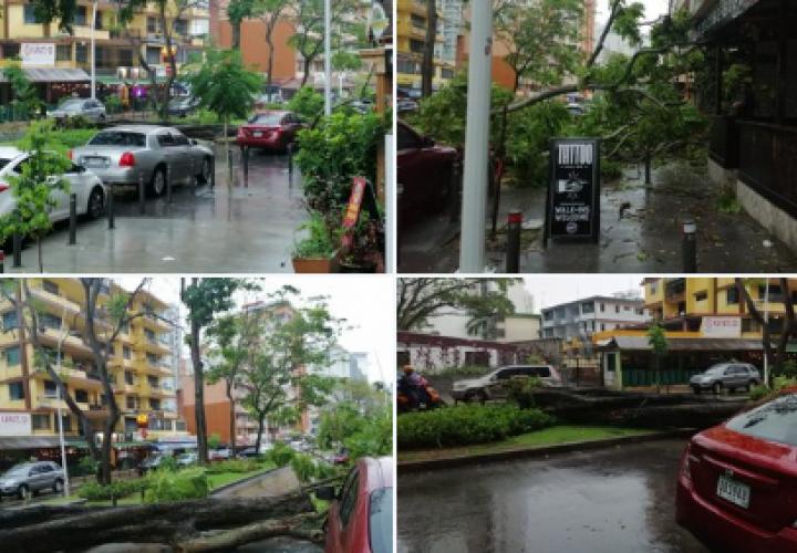 Calles anegadas y caída de árboles por fuerte lluvia en la ciudad [Videos]