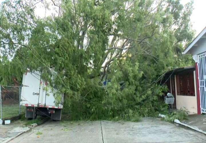 Enorme árbol cae sobre vivienda en Don Bosco