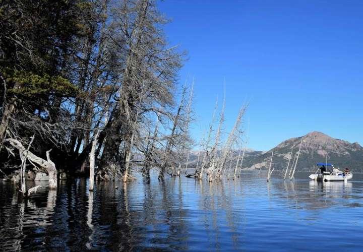 La imagen muestra parte del peculiar bosque sumergido de Villa Traful, una rareza geológica que según los expertos podría pasar de ser uno de sus principales atractivos turístico a causante de un tsunami que ponga en jaque a la Patagonia. EFE