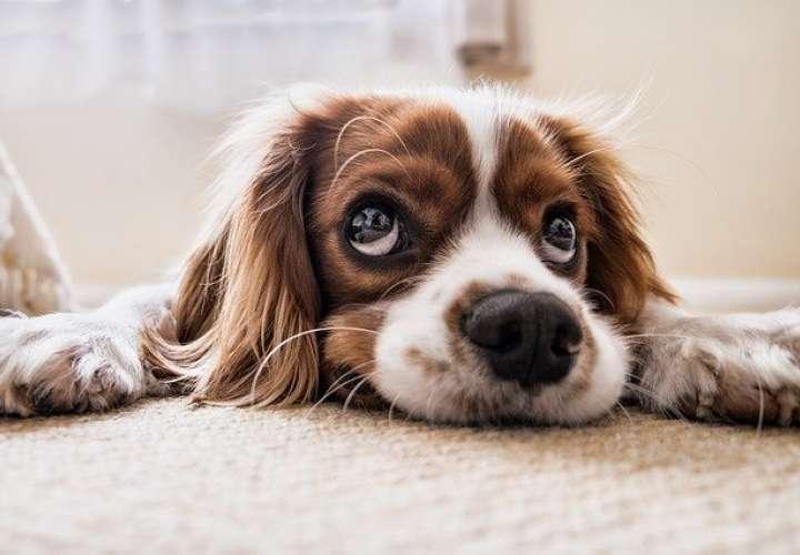 Resistencia del perro a enfermedades priónicas puede ayudar a nuevas terapias