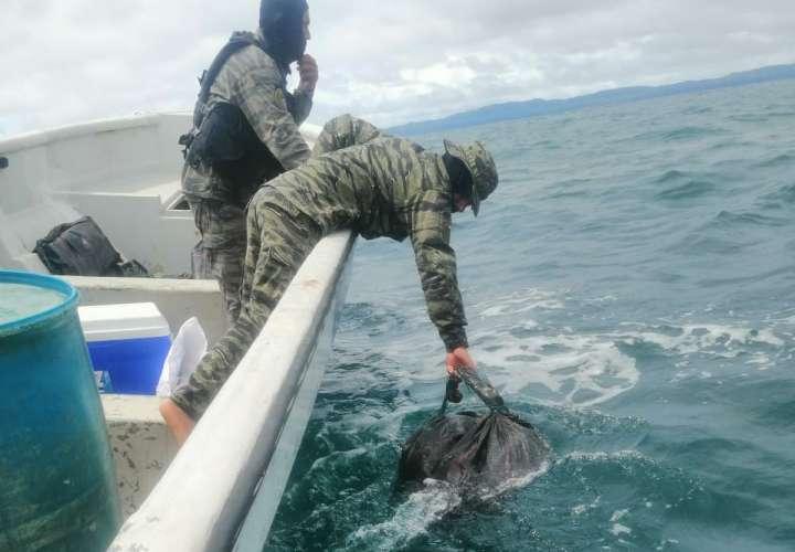 En una operación conjunta entre el Senan y la Policía se logró el decomiso de 120 paquetes de presunta sustancia ilícita en Isla Cébaco, provincia de Veraguas.