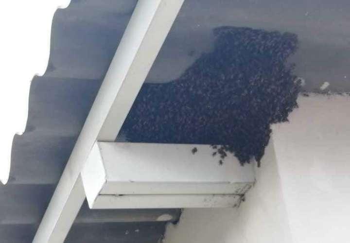 Tres perros mueren por picaduras de abejas africanizadas