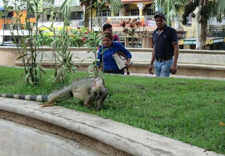 Retirarán iguana y ardillas de parque