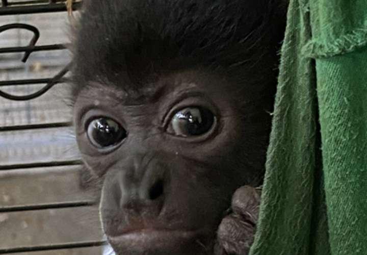 Más de 300 animales rescatados por el Summit