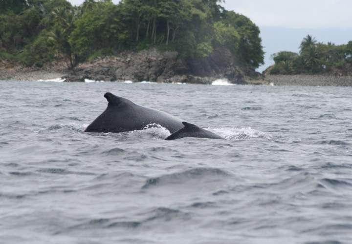 Inicia avistamiento de ballenas