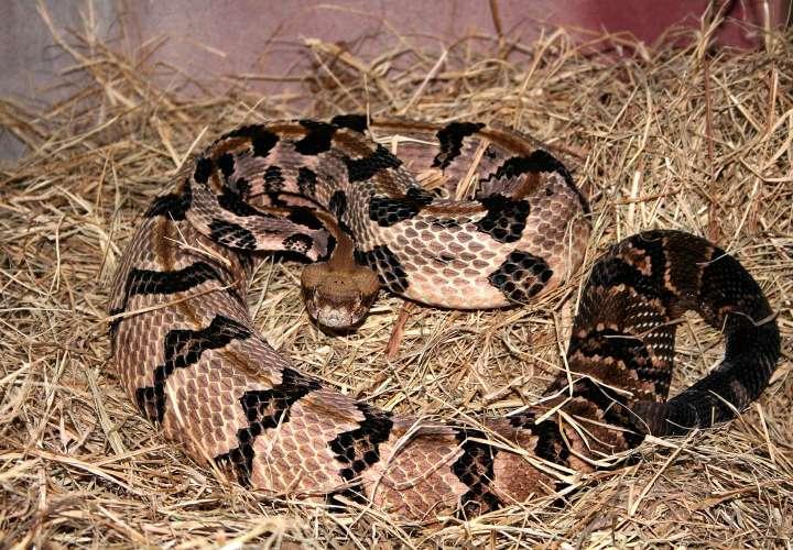 Muere por mordedura de serpiente en San Félix