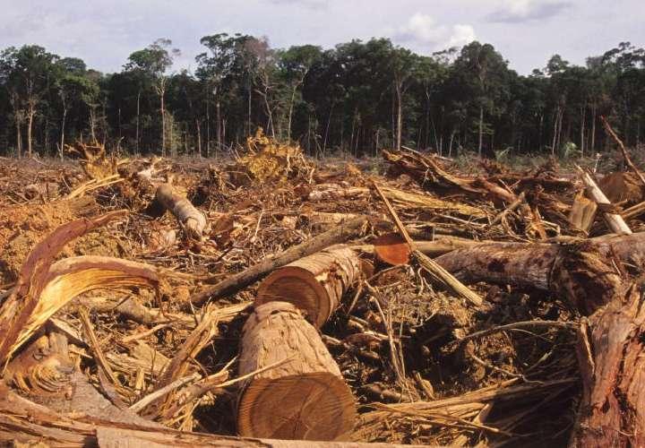 ¿Y qué pasó con la investigación de la deforestación en Darién?