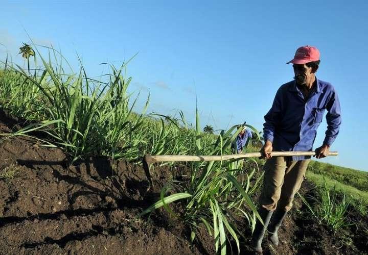 En el foro se debatirá sobre los desafíos que el cambio climático representa para la seguridad alimentaria regional, indicó la oficina regional de la Organización de las Naciones Unidas para la Alimentación y la Agricultura (FAO).  /  Foto: EFE Archivo