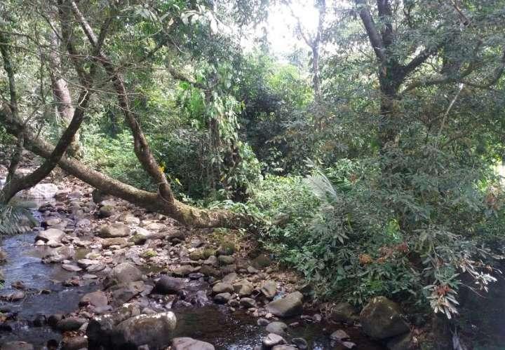 Atemorizados por presencia de puma en comunidad de Cabuya