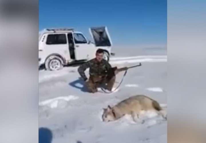 El animal sacó fuerzas de donde no tenía para defenderse.  Captura de video: RT en Español