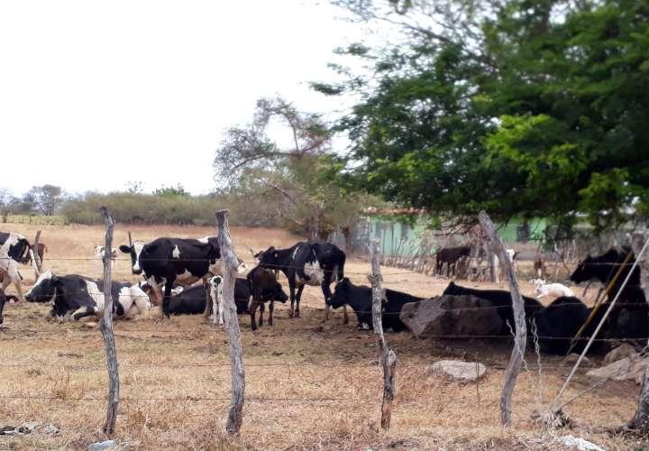 Preocupa la falta de agua en fincas herreranas