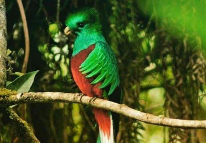 Panamá se prepara para mostrar su riqueza de aves