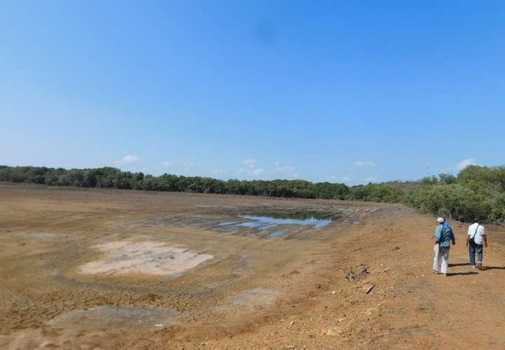 Piden investigar devastación de manglares