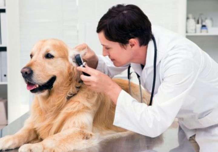 Ejecutivo veta aumento salarial a veterinarios