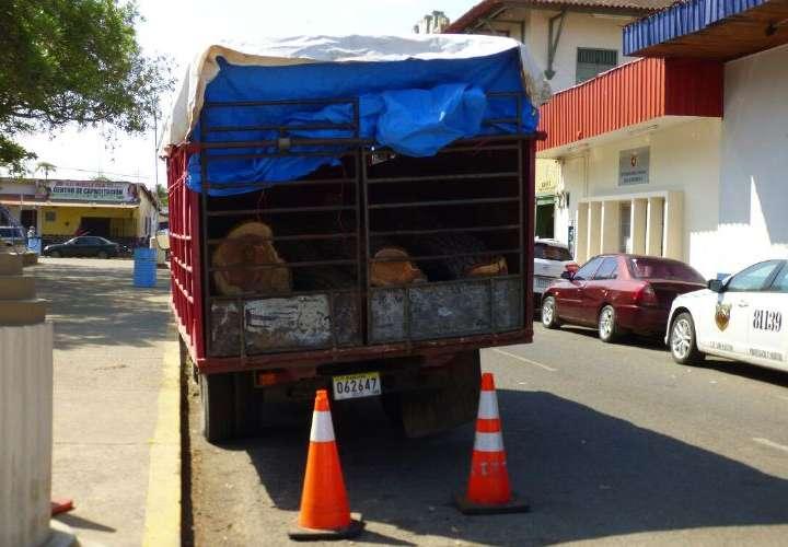 Decomisan tucas de kira en Los Santos
