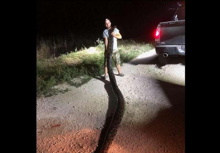 Kyle Penniston mientras sostiene una serpiente pitón birmana en los Everglades en Miami, Florida (EEUU). EFE