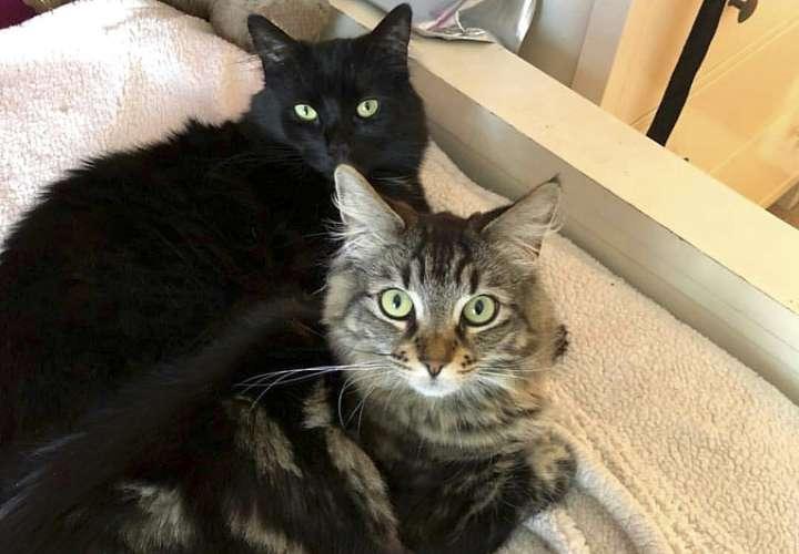 En la imagen aparecen las gatas Louise y Tina en San José, California. AP