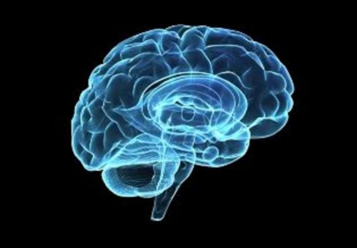 Imagen representativa de un cerebro. EFE