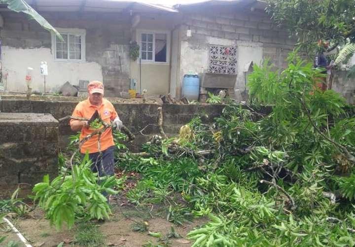 Árboles caen sobre dos residencias en Colón