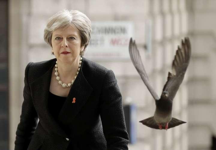 Foto de del lunes 23 de abril de 2018, una paloma despega cuando la Primera Ministra de Gran Bretaña, Theresa May, llega a un Servicio en Memoria para conmemorar el 25 aniversario del asesinato del adolescente negro Stephen Lawrence en Londres. Foto AP