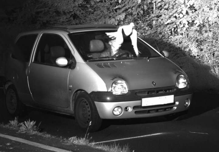 Cámara capta una paloma volando frente al parabrisas de un automóvil.  Foto: AP