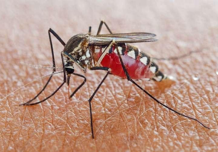 Día Mundial del Mosquito, ¿sabías que eso se celebraba?
