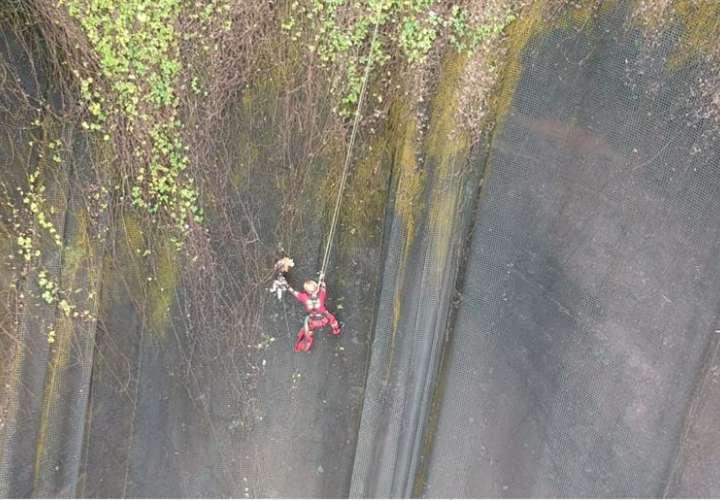 Perro se escapa, cae por un acantilado y termina enredado en una malla (Video)