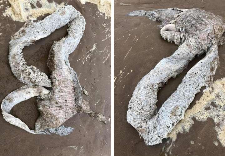 Calamar gigante o pulpo; nadie sabe qué es la extraña criatura hallada en Devon