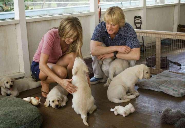 Tener un perro reduce los riesgos de infarto en sus dueños