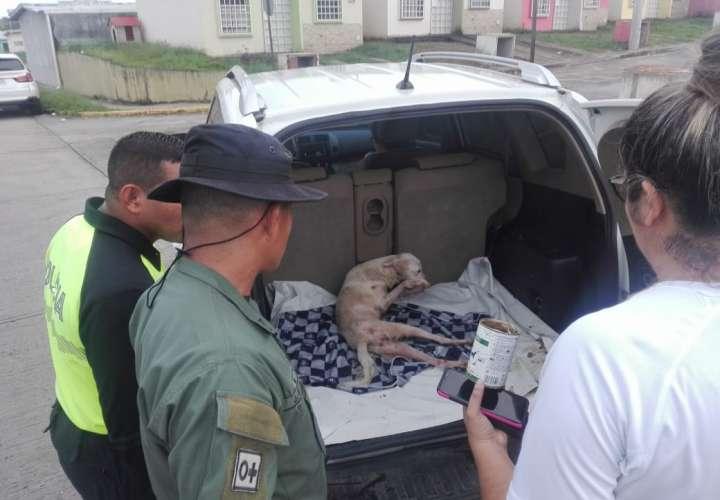 Perro que fue filmado casi agonizando está muy desnutrido (Video)
