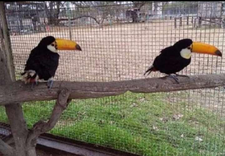 Inician investigación penal por decomiso de aves exóticas en Bocas