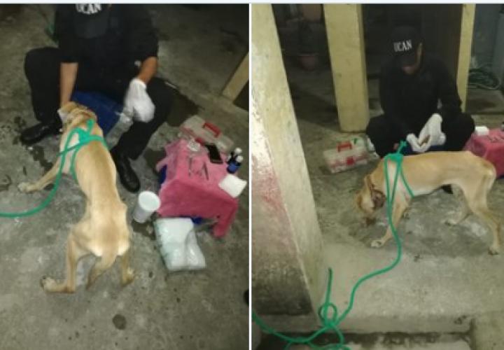 Rescatan a perro con alambre incrustado en el cuello [Video]